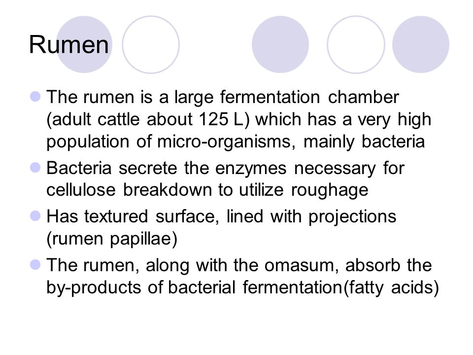Rumen The rumen is a large fermentation chamber (adult cattle about 125 L) which has a very high population of micro-organisms, mainly bacteria Bacter
