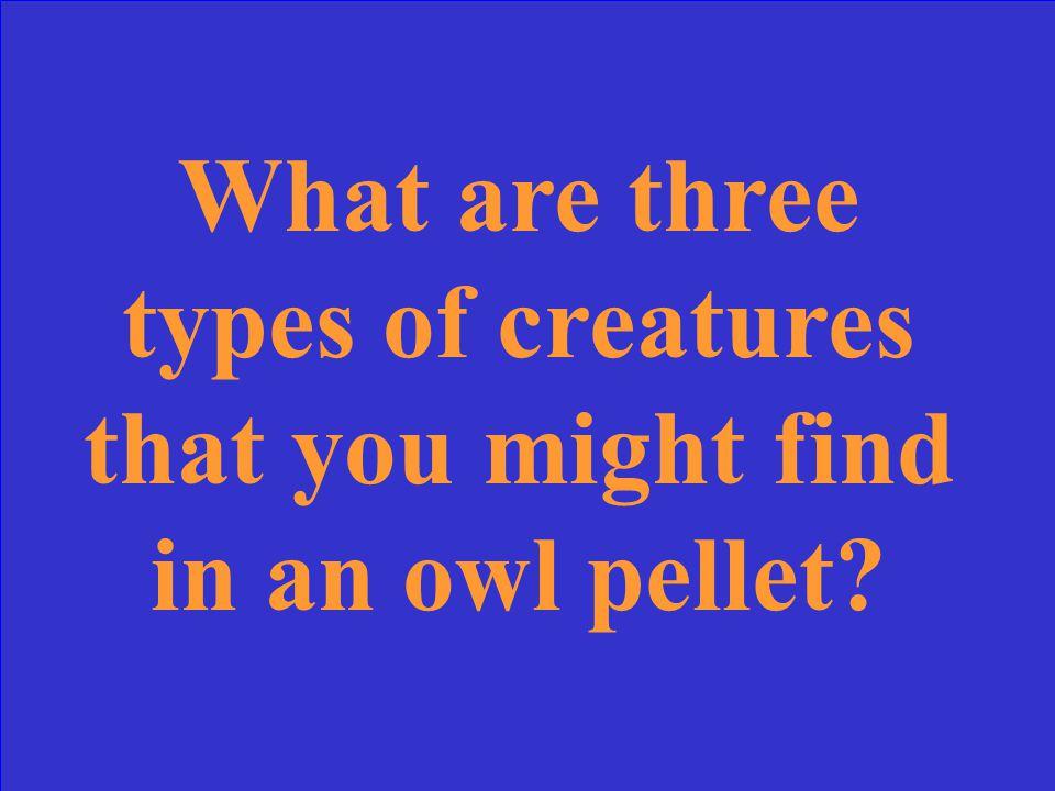 What are villi?