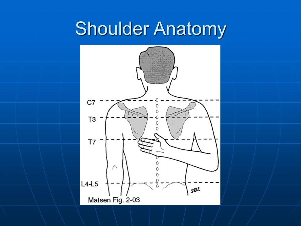 Shoulder Anatomy