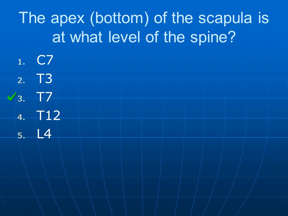The apex (bottom) of the scapula is at what level of the spine.