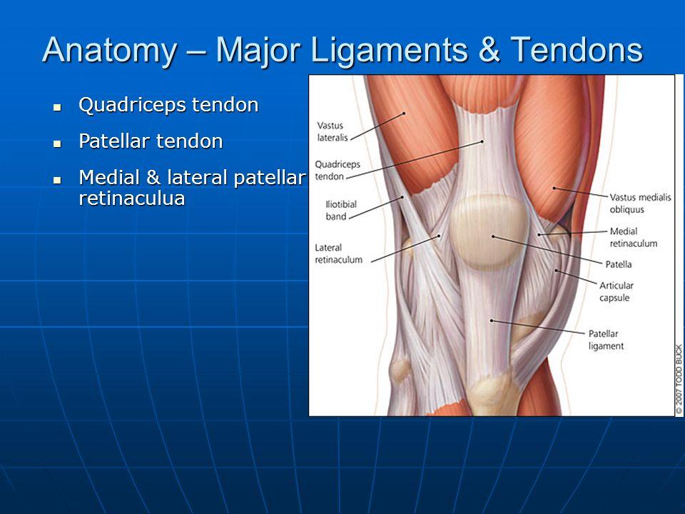 Anatomy – Major Ligaments & Tendons Quadriceps tendon Quadriceps tendon Patellar tendon Patellar tendon Medial & lateral patellar retinaculua Medial &