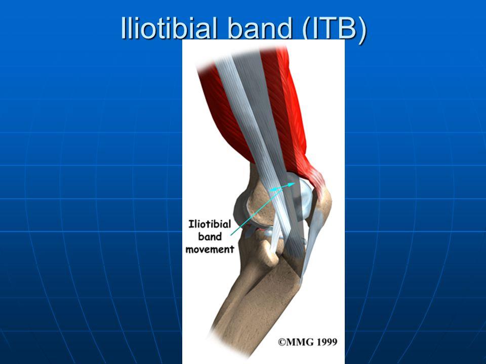 Iliotibial band (ITB)