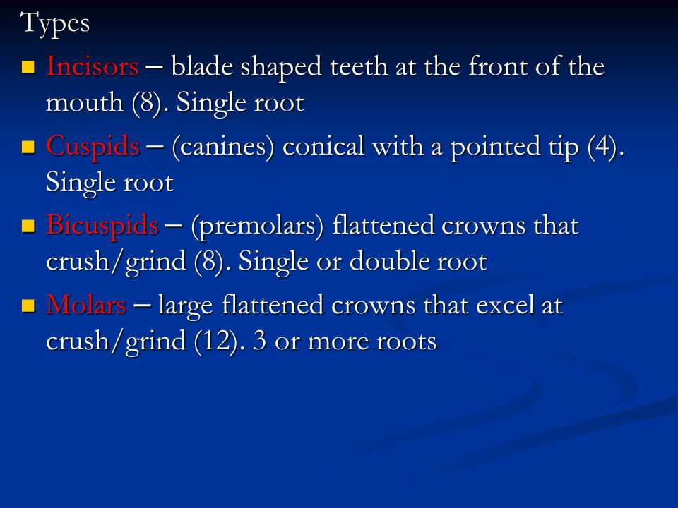 Types Incisors – blade shaped teeth at the front of the mouth (8). Single root Incisors – blade shaped teeth at the front of the mouth (8). Single roo