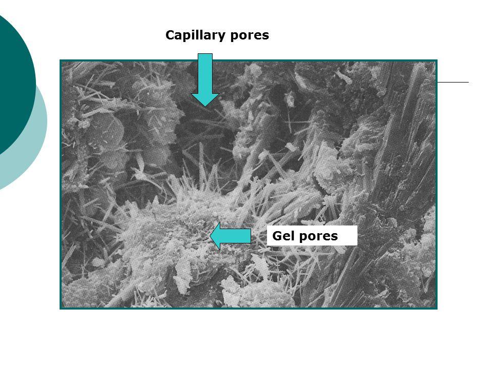 Capillary pores Gel pores