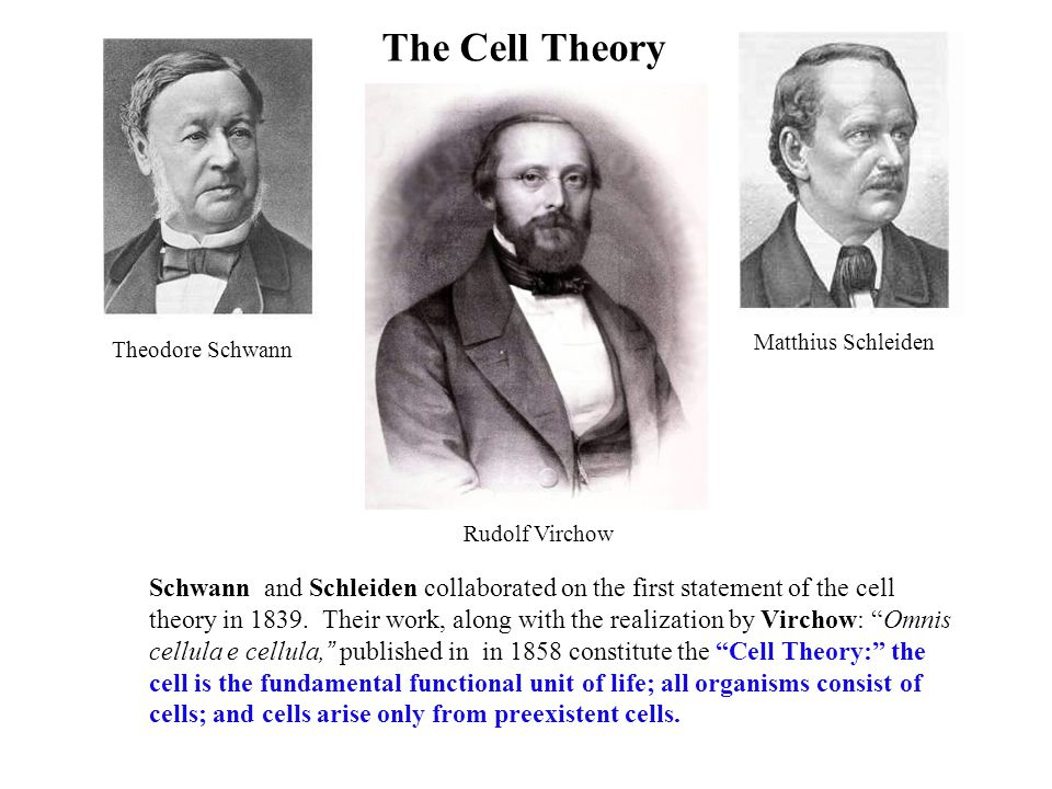 The Cell Theory Schwann and Schleiden collaborated on the first statement of the cell theory in 1839.