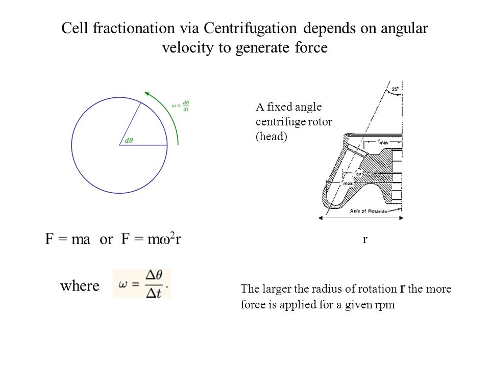 Cell fractionation via Centrifugation depends on angular velocity to generate force F = ma or F = m  2 r where The larger the radius of rotation r the more force is applied for a given rpm r A fixed angle centrifuge rotor (head)