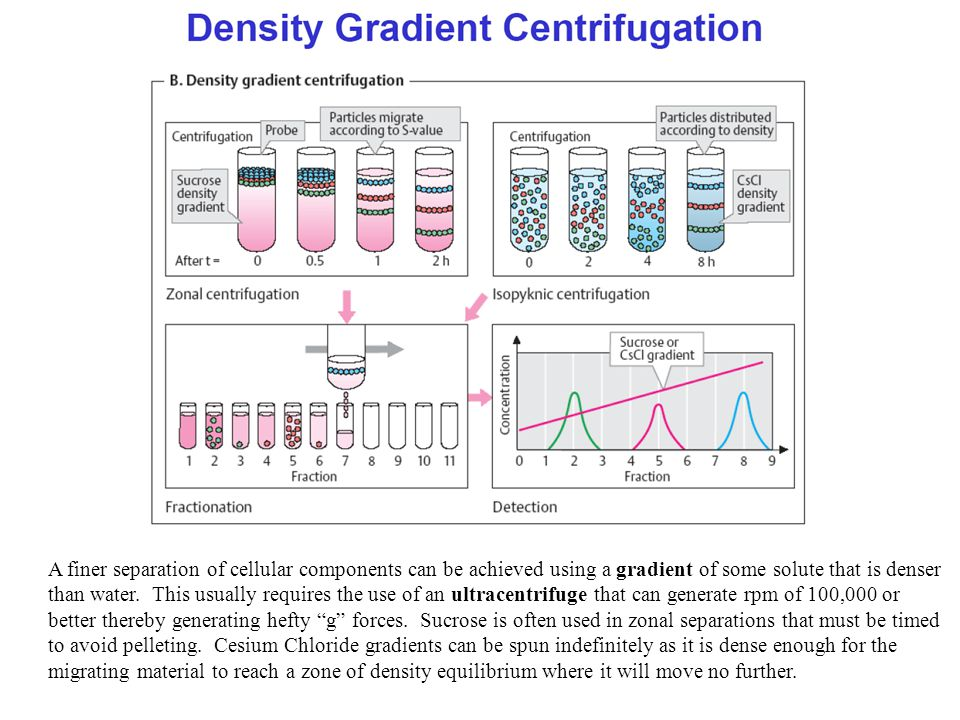 A finer separation of cellular components can be achieved using a gradient of some solute that is denser than water.