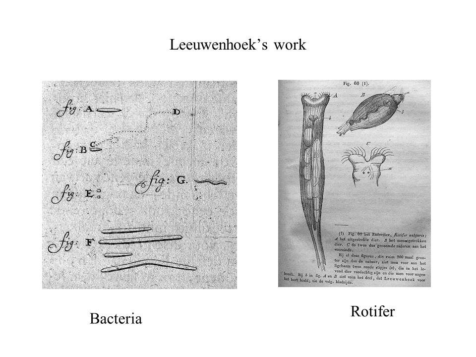 Leeuwenhoek's work Bacteria Rotifer