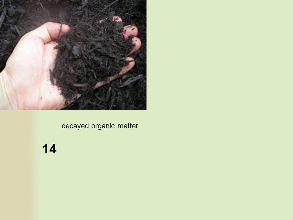 14 decayed organic matter
