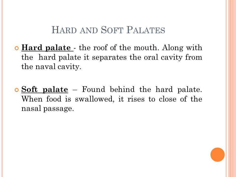 H ARD AND S OFT P ALATES Hard palate - the roof of the mouth.
