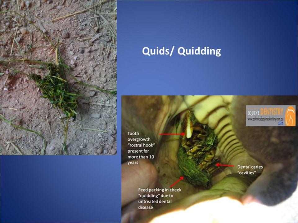 Quids/ Quidding