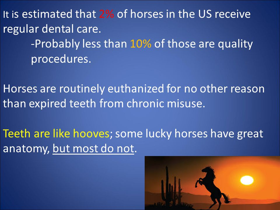 It i s estimated that 2% of horses in the US receive regular dental care.