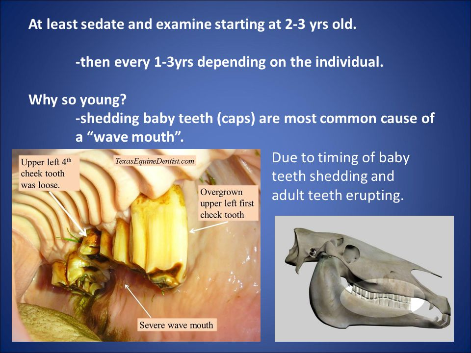 At least sedate and examine starting at 2-3 yrs old.