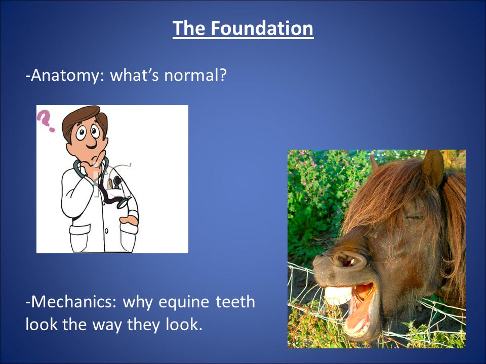 The Foundation -Anatomy: what's normal? -Mechanics: why equine teeth look the way they look.