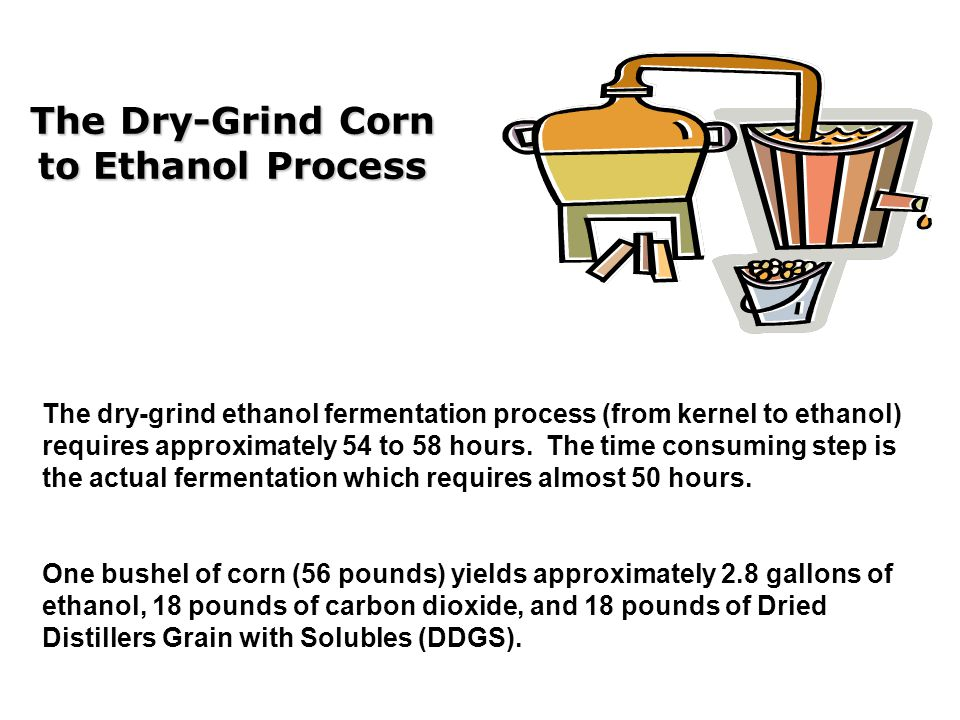 The Dry-Grind Corn to Ethanol Process The dry-grind ethanol fermentation process (from kernel to ethanol) requires approximately 54 to 58 hours.