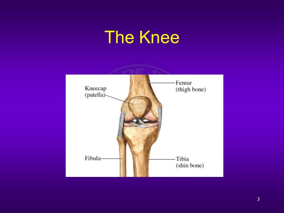 The Knee 3