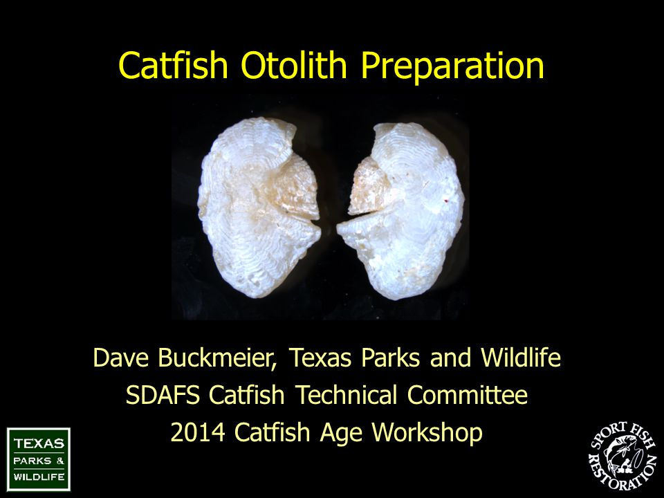 Catfish Otolith Preparation Dave Buckmeier, Texas Parks and Wildlife SDAFS Catfish Technical Committee 2014 Catfish Age Workshop