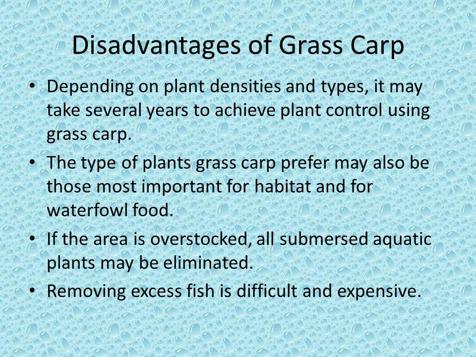Disadvantages of Grass Carp Depending on plant densities and types, it may take several years to achieve plant control using grass carp. The type of p