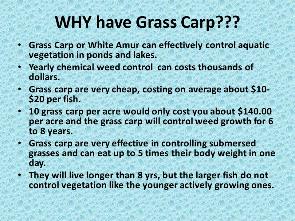 WHY have Grass Carp??? Grass Carp or White Amur can effectively control aquatic vegetation in ponds and lakes. Yearly chemical weed control can costs
