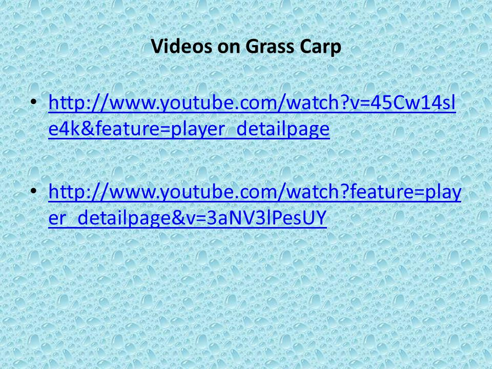 Videos on Grass Carp http://www.youtube.com/watch?v=45Cw14sl e4k&feature=player_detailpage http://www.youtube.com/watch?v=45Cw14sl e4k&feature=player_