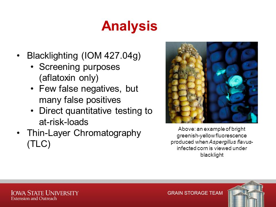 Analysis Blacklighting (IOM 427.04g) Screening purposes (aflatoxin only) Few false negatives, but many false positives Direct quantitative testing to at-risk-loads Thin-Layer Chromatography (TLC) Above: an example of bright greenish-yellow fluorescence produced when Aspergillus flavus- infected corn is viewed under blacklight