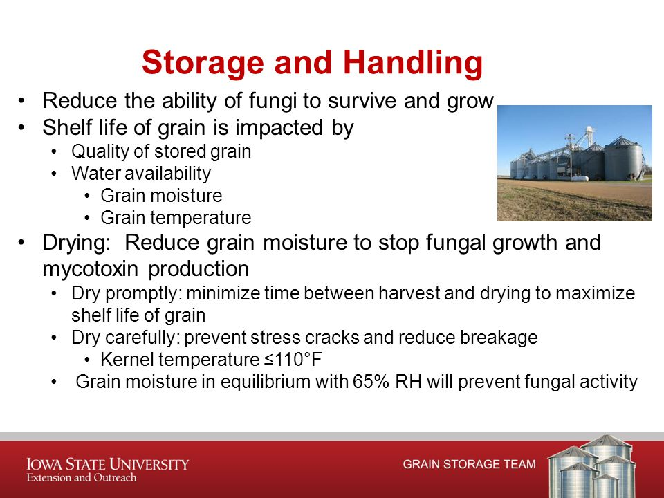 Reduce the ability of fungi to survive and grow Shelf life of grain is impacted by Quality of stored grain Water availability Grain moisture Grain temperature Drying: Reduce grain moisture to stop fungal growth and mycotoxin production Dry promptly: minimize time between harvest and drying to maximize shelf life of grain Dry carefully: prevent stress cracks and reduce breakage Kernel temperature ≤110°F Grain moisture in equilibrium with 65% RH will prevent fungal activity Storage and Handling
