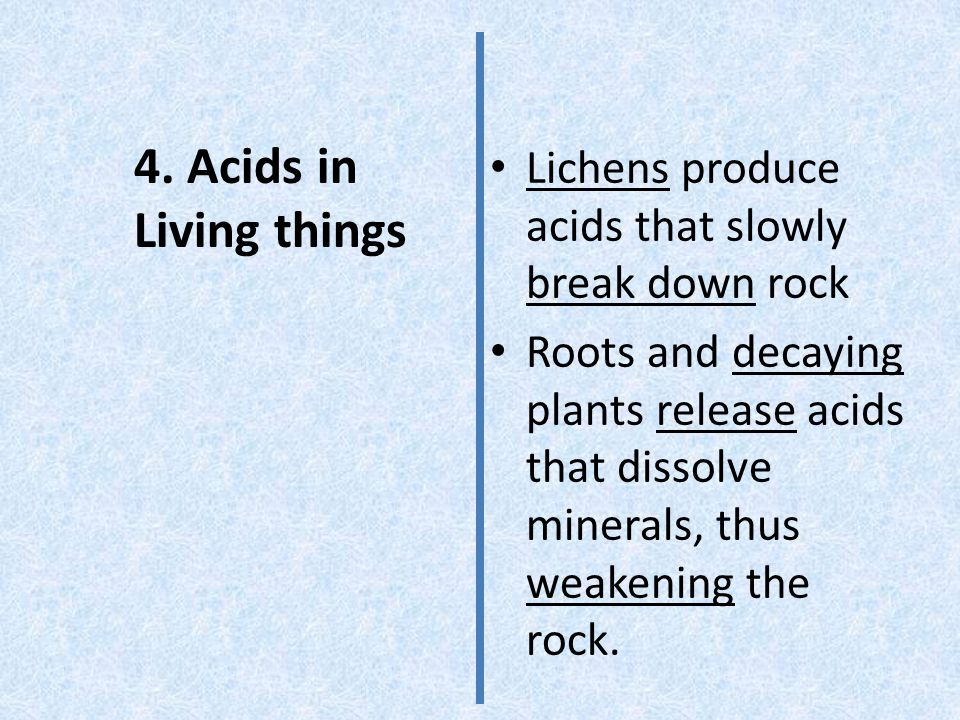 4. Acids in Living things Lichens produce acids that slowly break down rock Roots and decaying plants release acids that dissolve minerals, thus weake