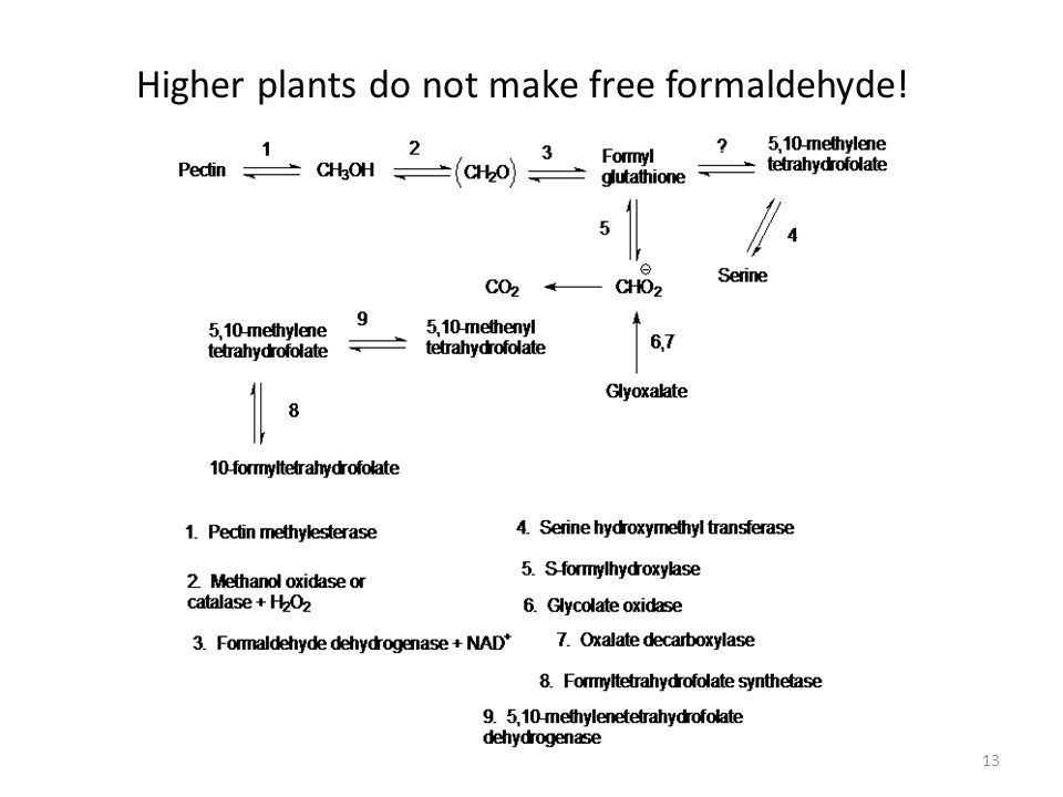 13 Higher plants do not make free formaldehyde!
