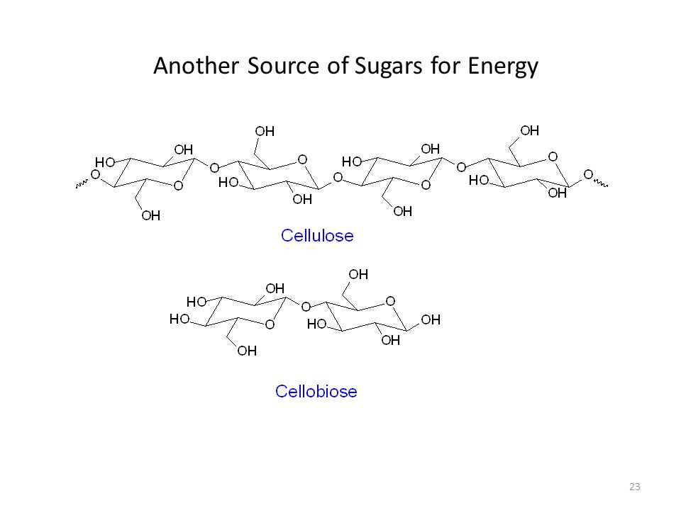 23 Another Source of Sugars for Energy