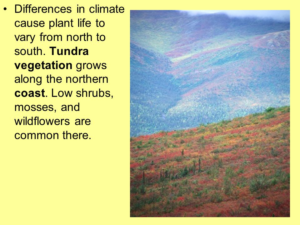 Differences in climate cause plant life to vary from north to south.