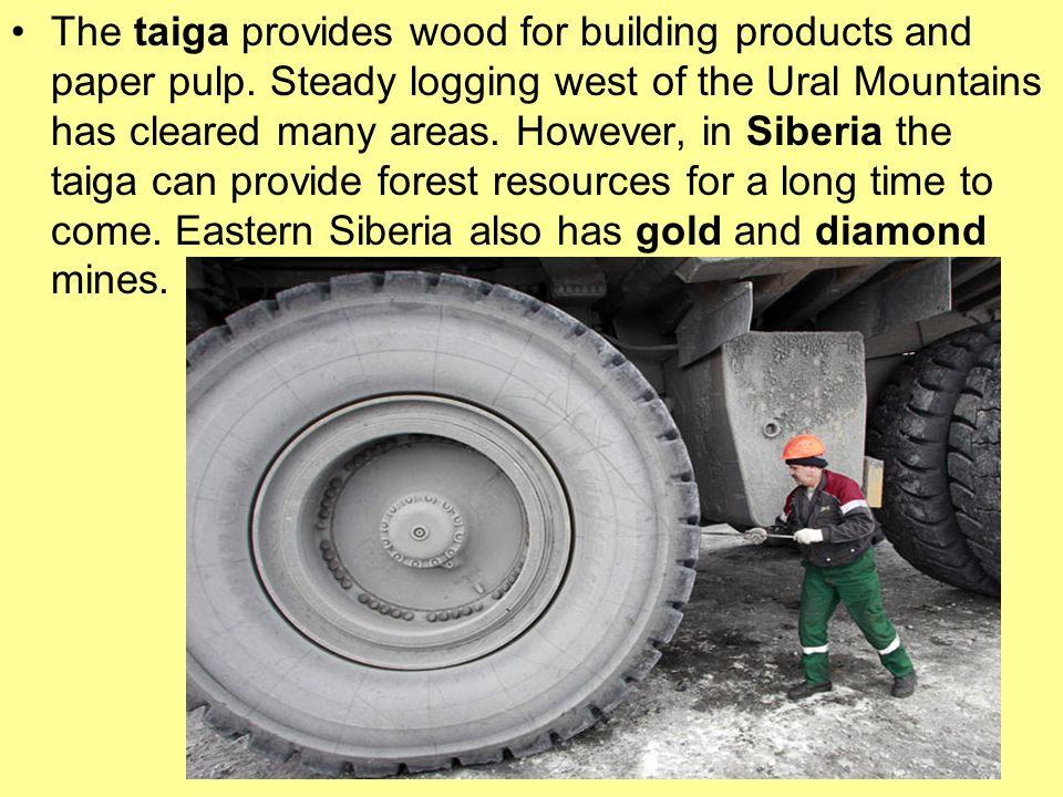 The taiga provides wood for building products and paper pulp.