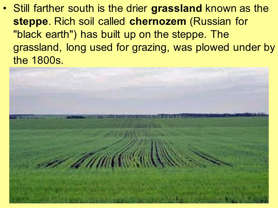 Still farther south is the drier grassland known as the steppe. Rich soil called chernozem (Russian for
