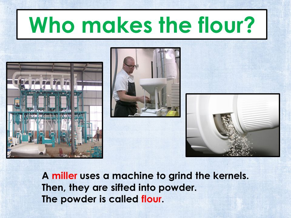 Who makes the flour. A miller uses a machine to grind the kernels.
