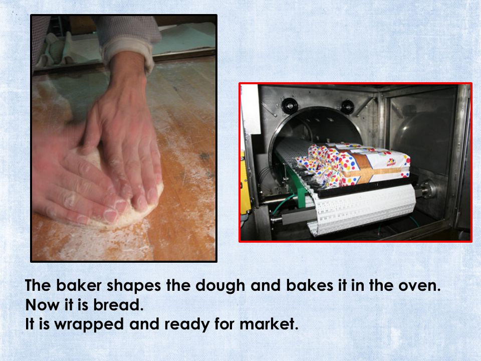 The baker shapes the dough and bakes it in the oven. Now it is bread. It is wrapped and ready for market.
