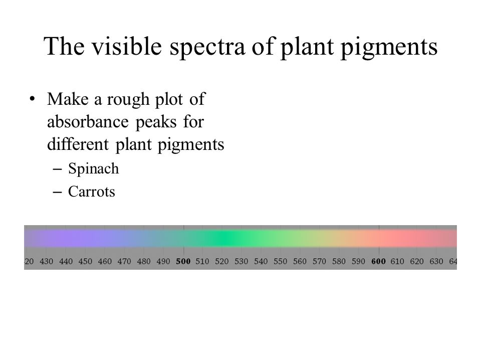 The visible spectra of plant pigments Make a rough plot of absorbance peaks for different plant pigments – Spinach – Carrots