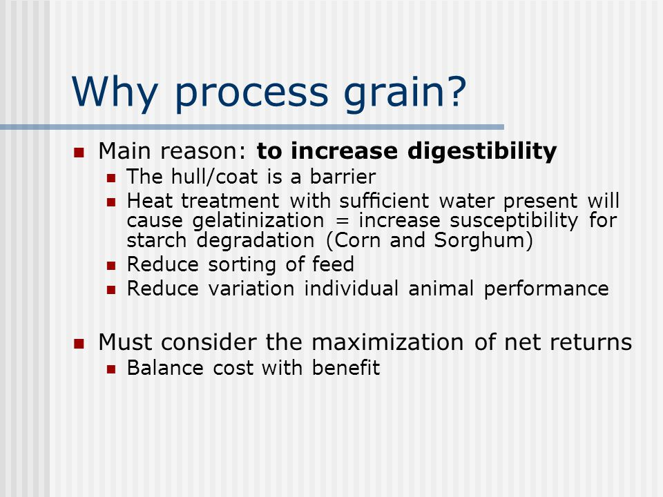 Grain Processing Physical – interrupt the seed coat Expose grain to digestive enzymes Make more palatable Heating – starch swells and gelatinization o