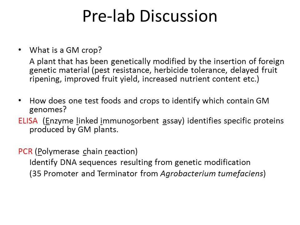 Pre-lab Discussion What is a GM crop? A plant that has been genetically modified by the insertion of foreign genetic material (pest resistance, herbic