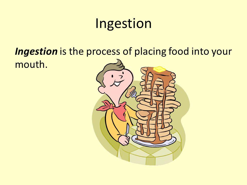 Inside the Large Intestine http://www.google.co m/imgres?imgurl=http: //www.gihealth.com/i mages/imgNormalColo n.gif&imgrefurl=http:// www.gihealth.com/ht ml/education/photo/n ormalColon.html&usg= __tDwU8h5TKVCZ0VTA JLZE6wB4Uko=&h=234 &w=216&sz=31&hl=en &start=7&zoom=1&itb s=1&tbnid=EM3Pa5izw gyEGM:&tbnh=109&tb nw=101&prev=/images %3Fq%3Dinside%2Bcol on%2Bimage%26hl%3 Den%26sa%3DX%26rls %3Dcom.microsoft:en- us%26tbs%3Disch:1%2 6prmd%3Di