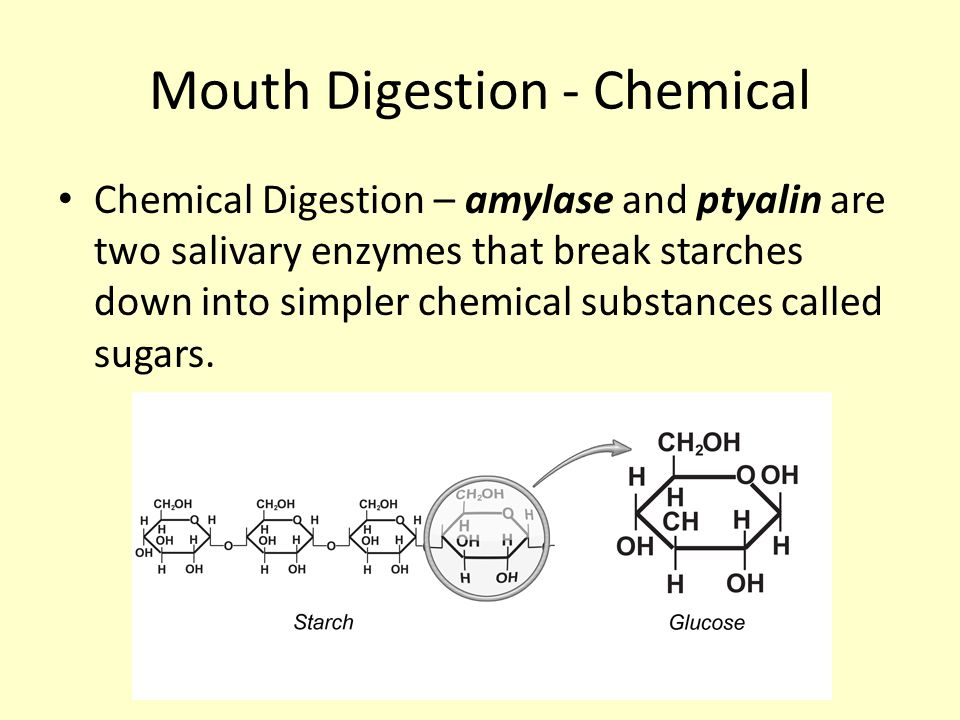 Mouth Digestion - Chemical Chemical Digestion – amylase and ptyalin are two salivary enzymes that break starches down into simpler chemical substances called sugars.