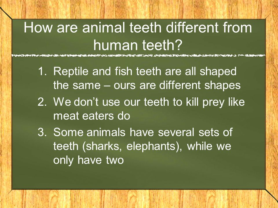 How are animal teeth different from human teeth? 1.Reptile and fish teeth are all shaped the same – ours are different shapes 2.We don't use our teeth