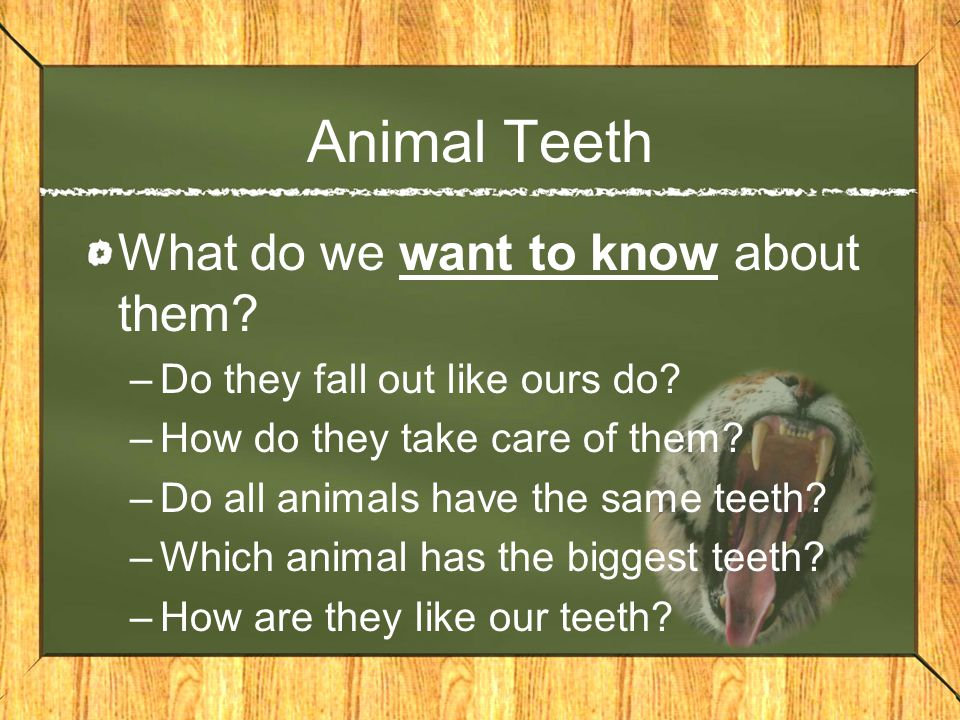 Human Teeth What do we know about them.