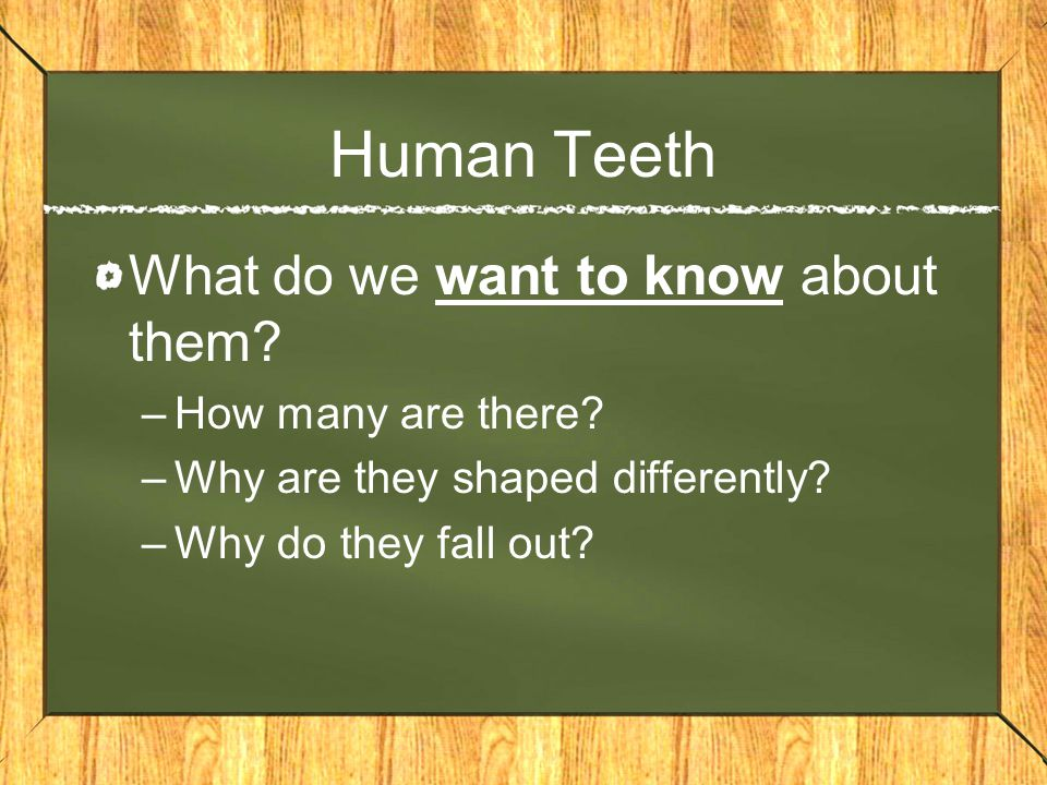 Our 3 types of teeth: 1.Incisors –Front teeth 2.