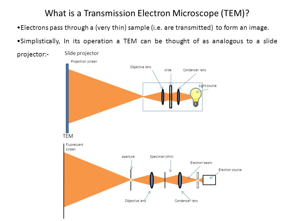 Electrons pass through a (very thin) sample (i.e. are transmitted) to form an image. Simplistically, In its operation a TEM can be thought of as analo