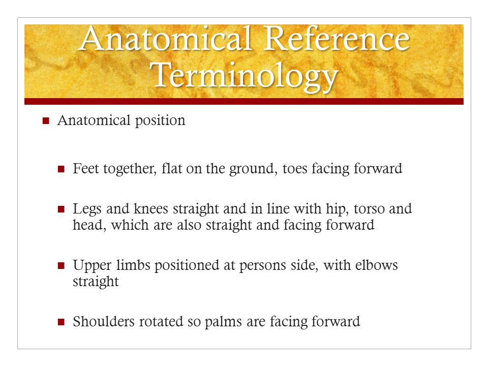 Anatomical Reference Terminology All anatomical descriptions and references are based on standardized position of the body Anatomical Position Allows us to reference specific body regions in relation to the body as a whole and one anatomical landmark to another Avoid confusion and misinterpretation of your findings Can be standing or supine (on the spine) Standing most common and easiest to visualize