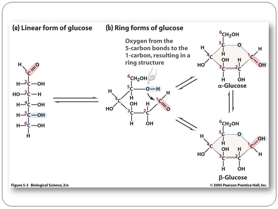 summary of carbohydrates monosaccharides disaccharides polysaccharides
