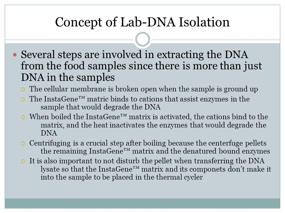 Concept of Lab-DNA Isolation Several steps are involved in extracting the DNA from the food samples since there is more than just DNA in the samples 