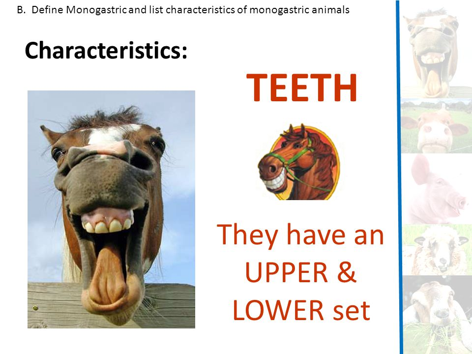 TEETH They have an UPPER & LOWER set Characteristics: