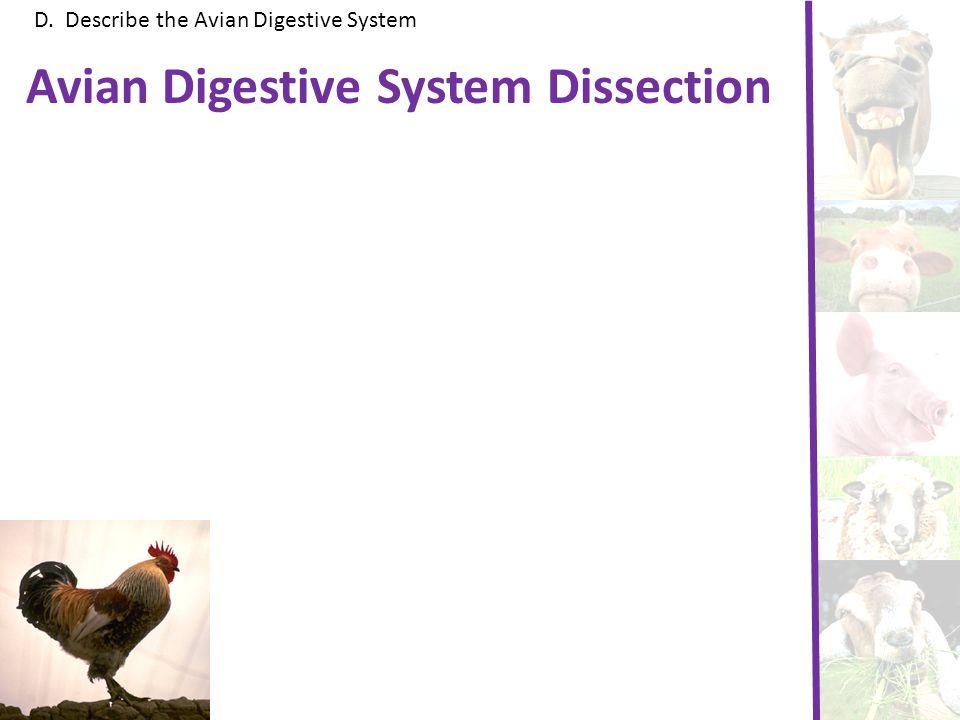 D. Describe the Avian Digestive System Avian Digestive System Dissection