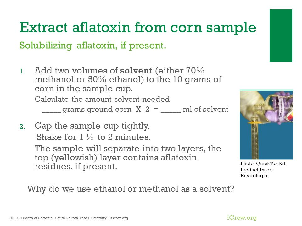 iGrow.org Extract aflatoxin from corn sample 1. Add two volumes of solvent (either 70% methanol or 50% ethanol) to the 10 grams of corn in the sample