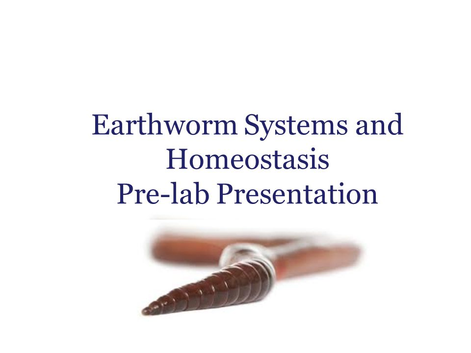 Earthworm Systems and Homeostasis Pre-lab Presentation